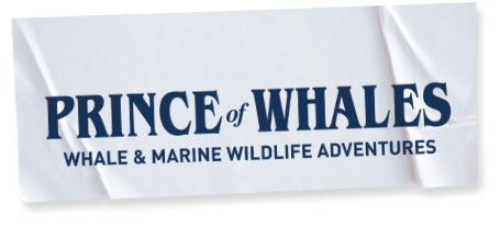 Prince of Whales Whale & Marine Wildlife Adventures