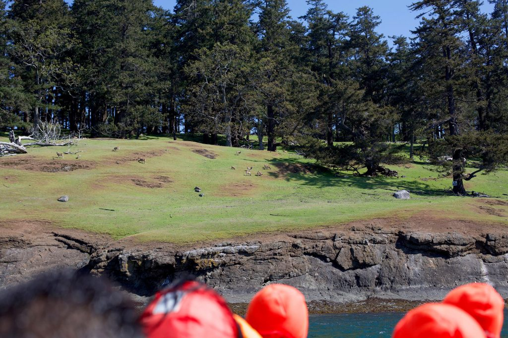 View of Spieden Island on Whale Watching Tour