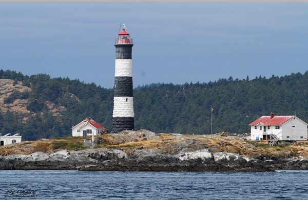 Whale Watching Tour Sights